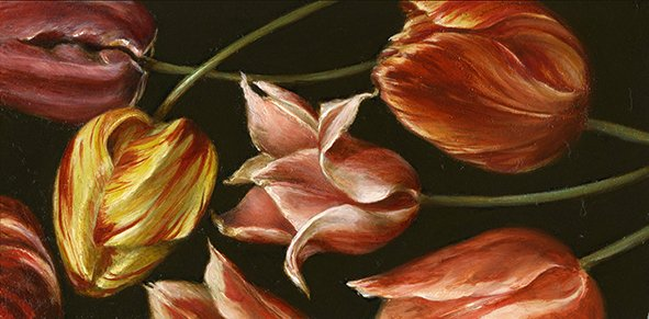Still life: Tulip study. Oil on wood, 10x20cm
