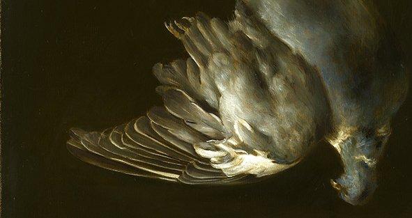 Wood pigeon by Tanja Moderscheim