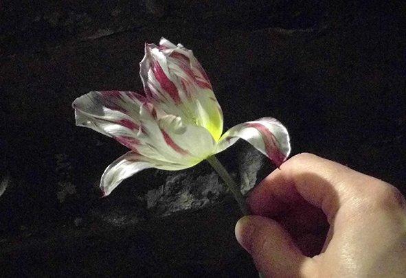 zilver standaard tulip 1760
