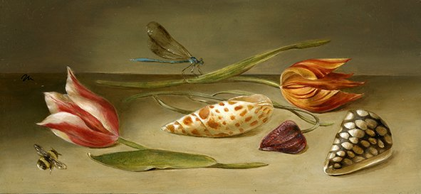 Lac van Rijn (1620) and Gouden Standaard (1760) tulips with F. meleagris (1573), shells and insects. Oil on poplar panel, 13x28cm
